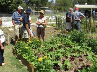 community garden varsity lakes 012