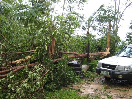 Big tree just missed the car