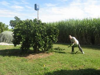 Jack raking prunings to put through the mulcher