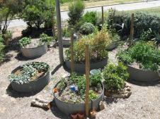 Great way to grow veggies