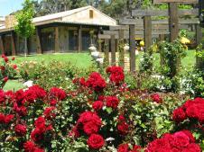 Stunning rose garden