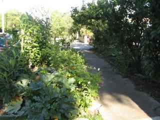 Front verge planted in vegies