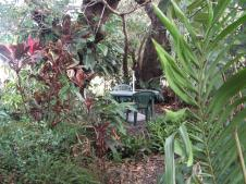 Gerry's rainforest garden