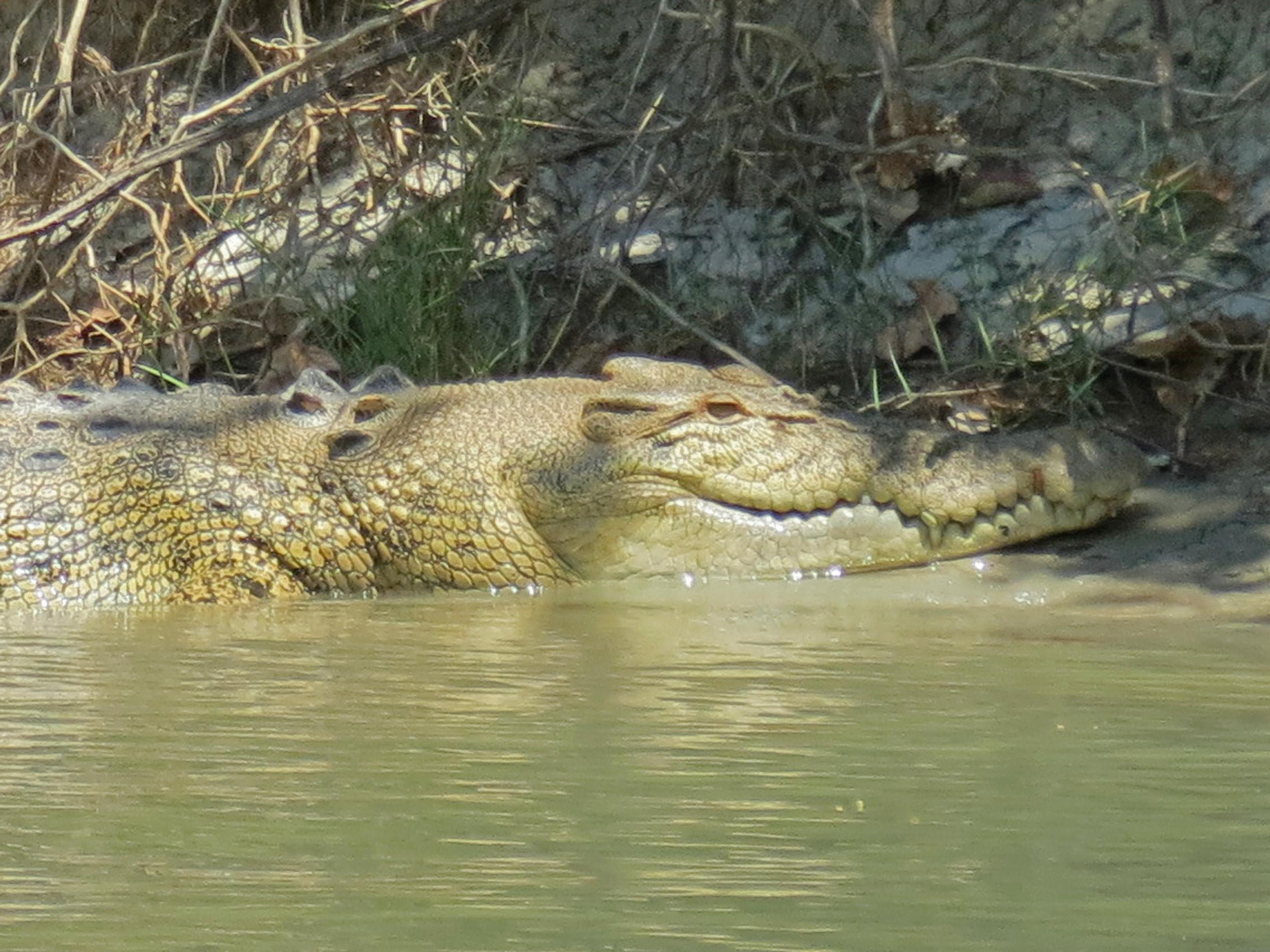 the alligator river story The alligator river story - ethics in the esl classroom this is a famous story for ethics classes adapted for use in the esl classroom your students will be.