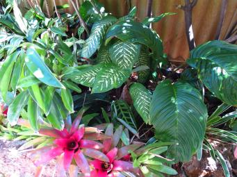 Bromeliad and tropical foliage