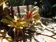 Buddha behind bromeliad