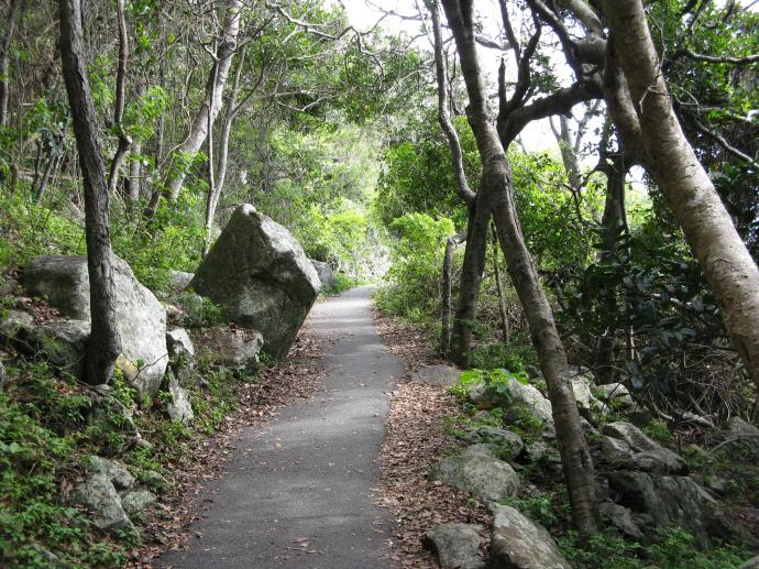 Burleigh Heads National Park walking track
