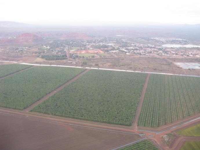 Huge irrigated vegetable crops