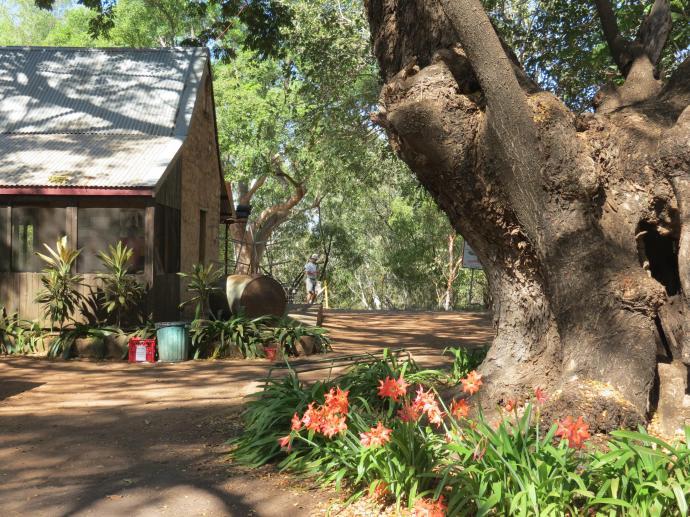 Katherine Springvale homestead pc sx40 014_4000x3000
