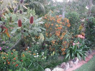 Side border of native plants