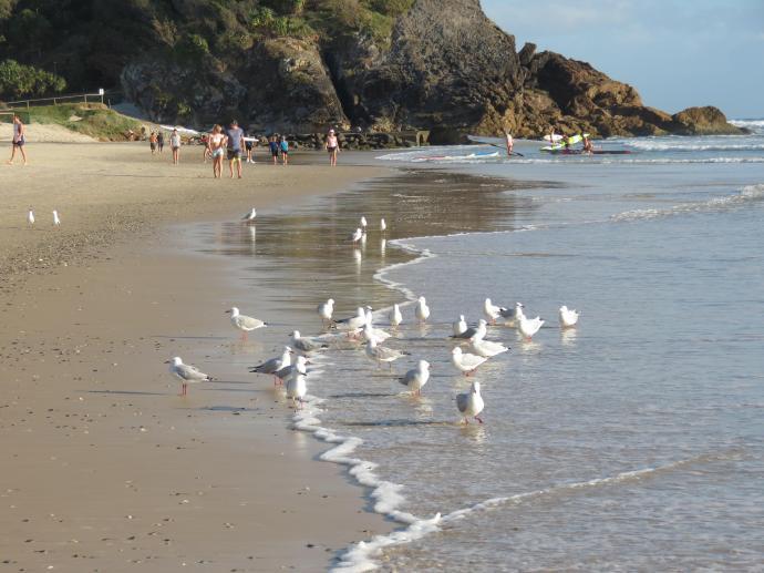 Seagulls in the sun