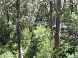 Walk way bridge over the tree canopy WA