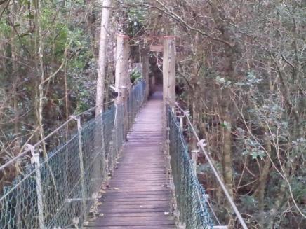 Tree-top walk