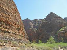 Track through the Bungles