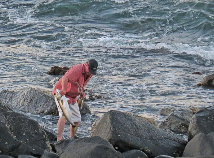 Great catch, trevally caught from the rocks