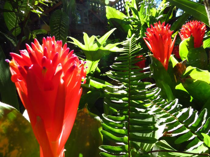 Bromeliad in glorious bloom