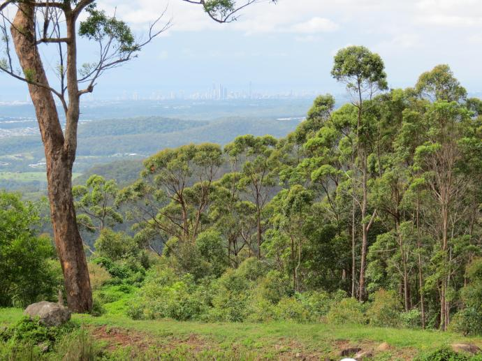 Lamington National Park, glimpse down to the Goldcoast from a look out.