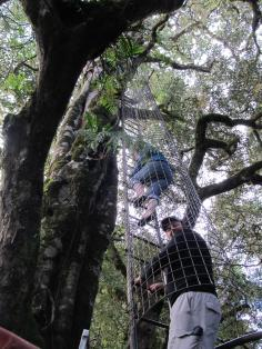 Climbing to the look-out over the canopy
