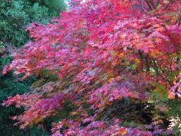 Vibrant autumn colour