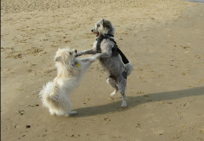 Henry and Tessa at play, dancing