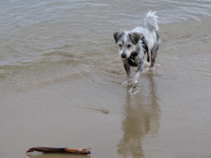Fetch Henry