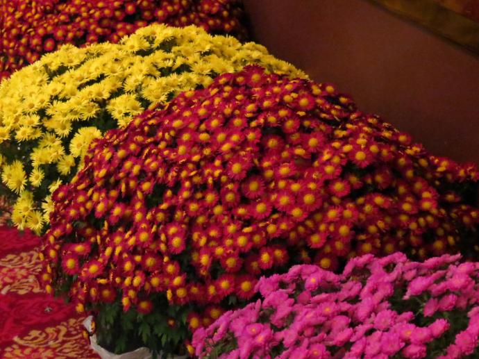 . A taste of what was to come.Massed chrysanths as you entered