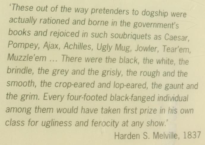Description of dogs