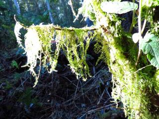 Moss drapes all the branches