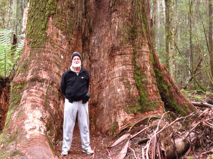 Jack dwarfed by the swamp gum