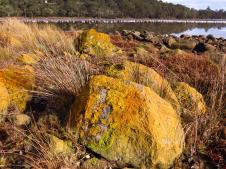 Colourful lichen covered rocks