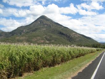 Cane crop near Mackay