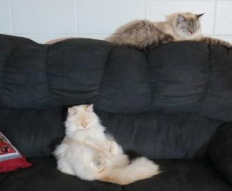 Good friends relaxing together