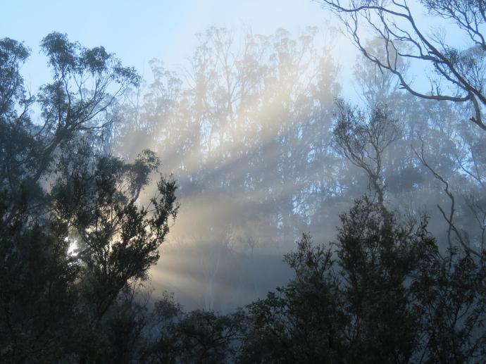 Suddenly a glorious burst of sunlight pierced the mist