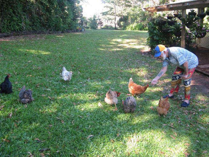 Jack feeding the chooks
