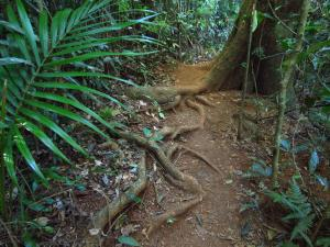 Rainforest track to the falls