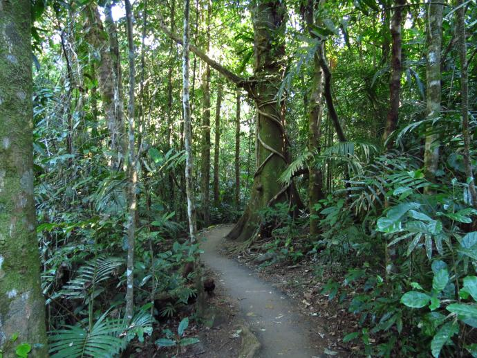 Rainforest, landscape