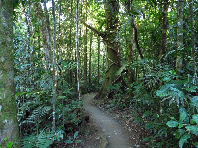 Rainforest, landscape
