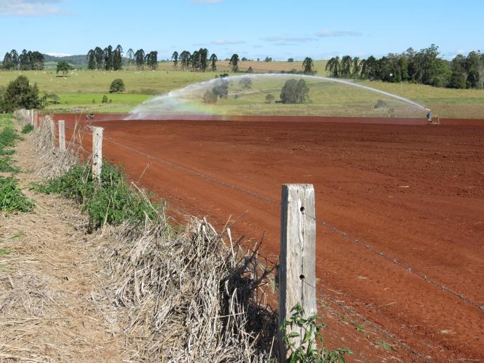 Irrigating the land in preparation for a maize crop. Just look at the colour of the soil.