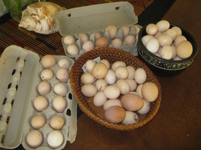 6 dozen+ eggs
