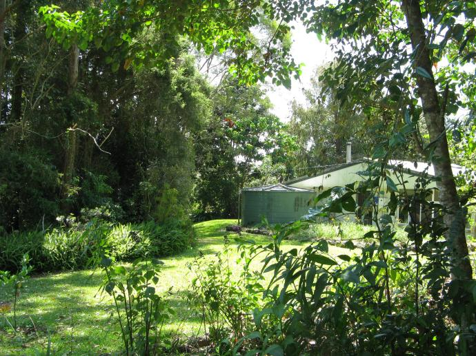 Our own private rainforest