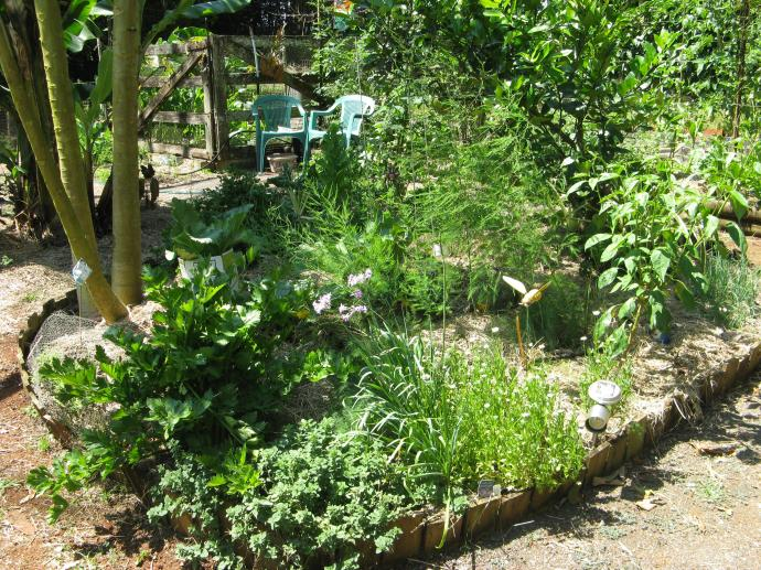 Part of the vegetable patch