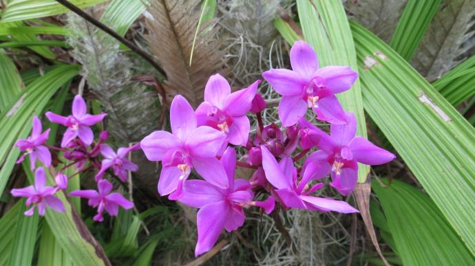 On the shady side the orchids are flowering
