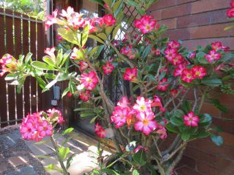 garden nov 2013 002_4000x3000