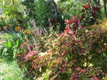 garden nov 2013 040_4000x3000