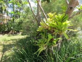 garden nov 2013 047_4000x3000