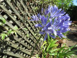 garden nov 2013 052_4000x3000