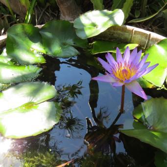 garden nov 2013 059_4000x3000