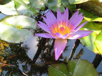 garden nov 2013 060_4000x3000