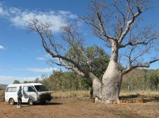 Camping under Boab trees