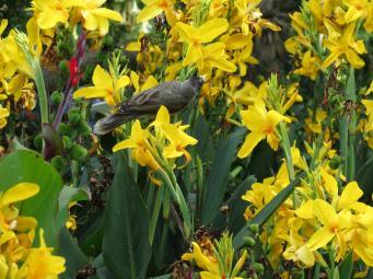 Even the birds enjoy these gardens